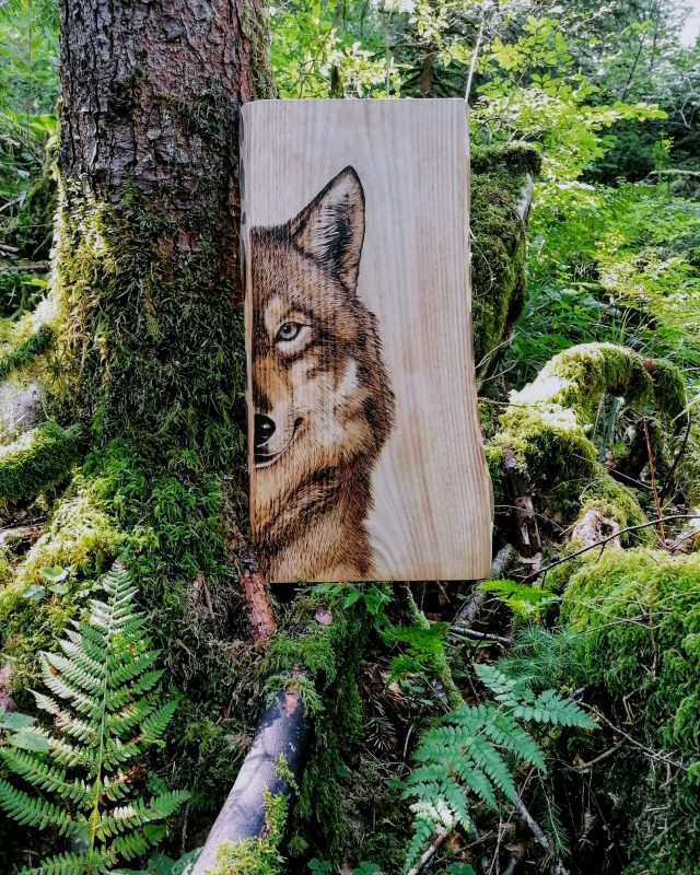 Pyrogravure sur bois demi loup foret artiste animalière wolf in the woods